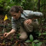 Yale's Liza Comita to Be Honored by the British Ecological Society